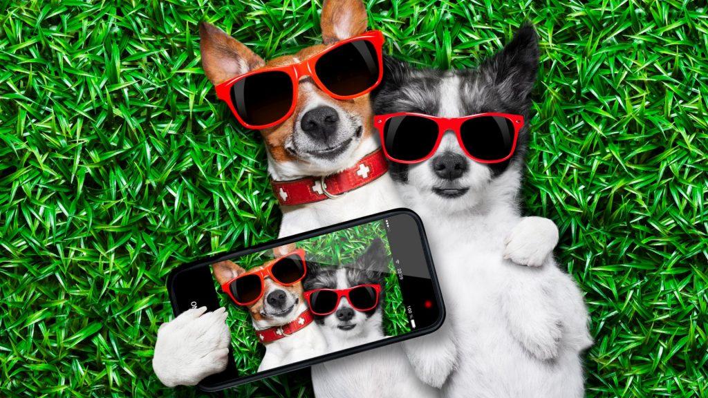 instagram-5-idee-per-guadagnare-sui-social_corsetty-corsi-marketing-digitale-online_veronica-spora-benini